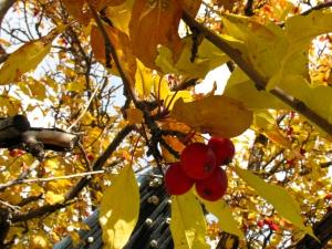 treeberries